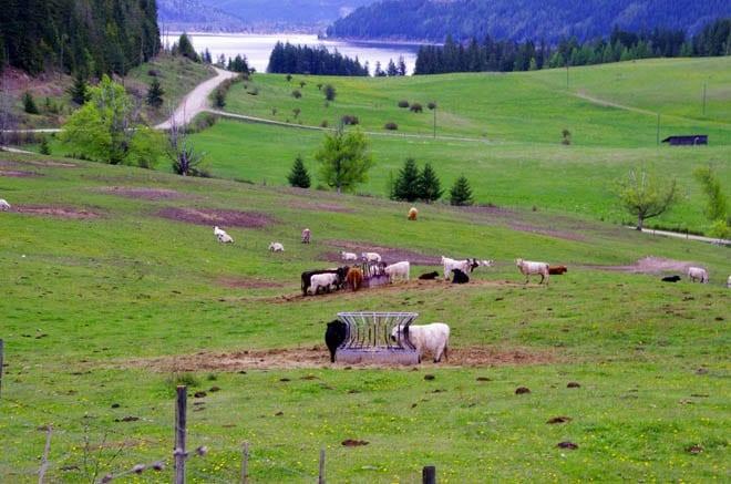 """An organic beef farm"""