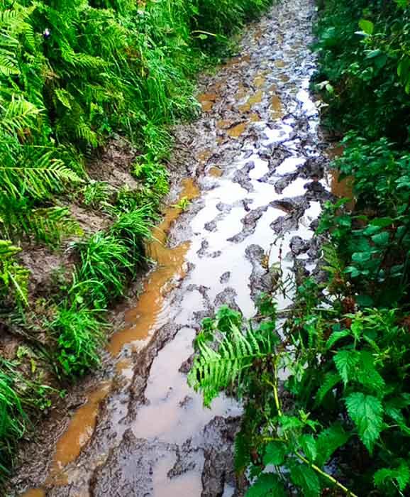 Mud galore on the Southwest Coast Path
