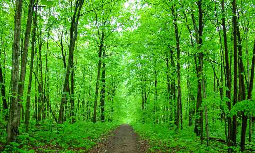 A path of green hiking in Awenda