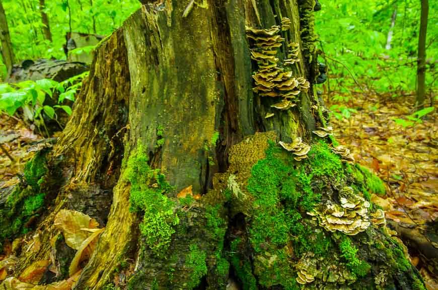 Lots of interesting fungi
