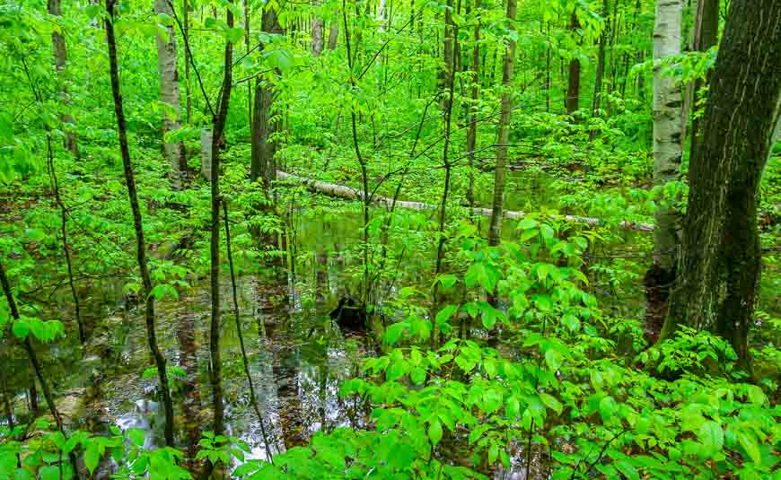 Reflections in Awenda Provincial Park