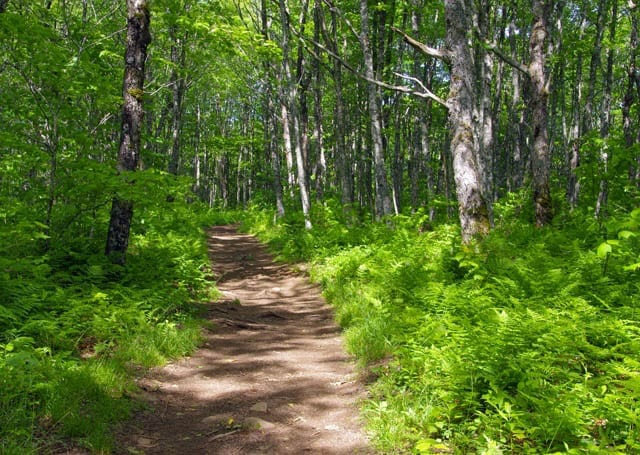 """""""Open forest trail"""""""