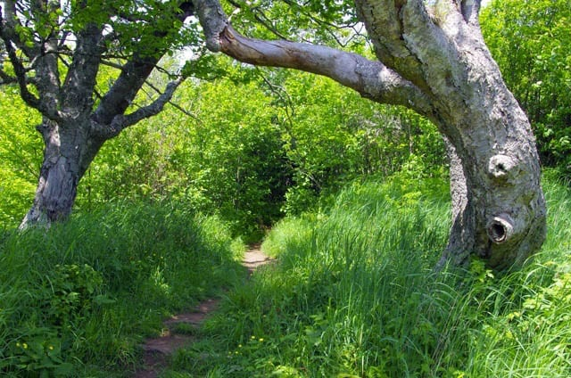 """""""trail through the woods"""""""
