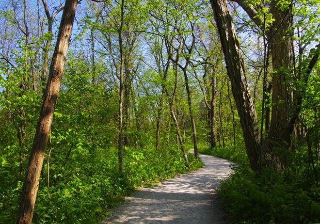 """Quiet path through the woods"""