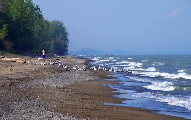 """Beach and gulls"""