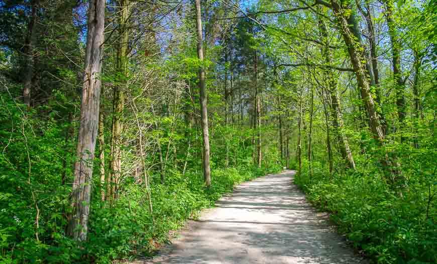 Quiet path through the woods