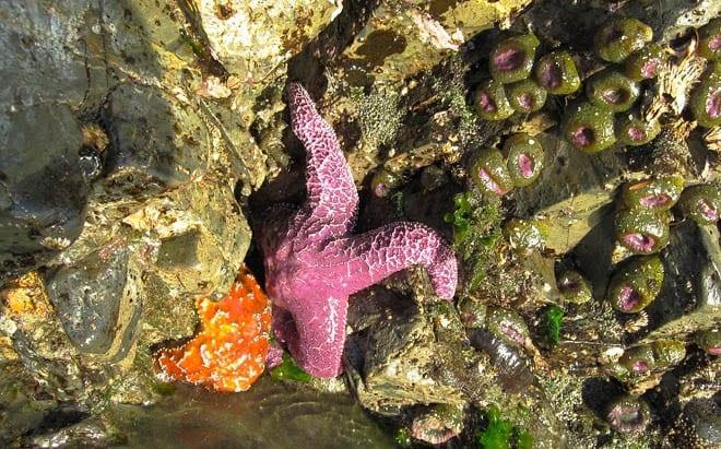 """""""Starfish finds in Tofino"""""""