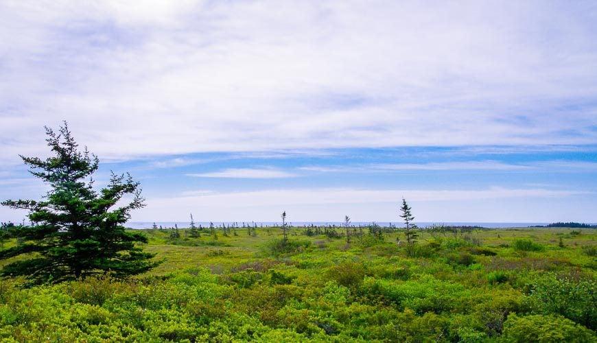 Kejimkujik National Park Seaside landscape near the ocean