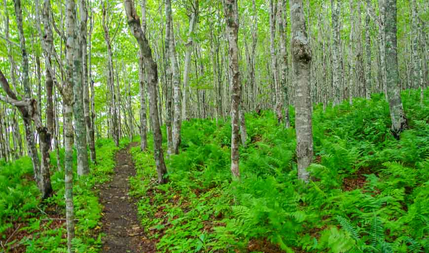 Beautiful woods at the beginning of the hike