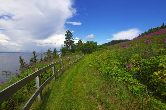 """""""Wildflower lined trail in Forillon"""""""