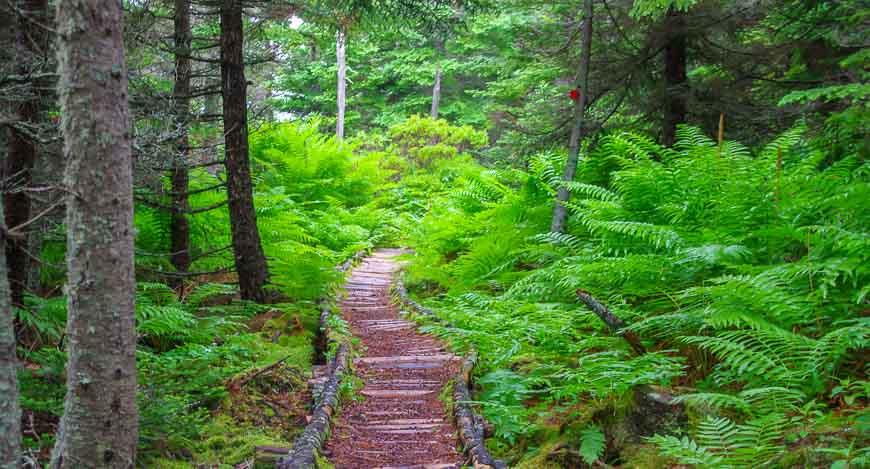 Lush trail through the woods