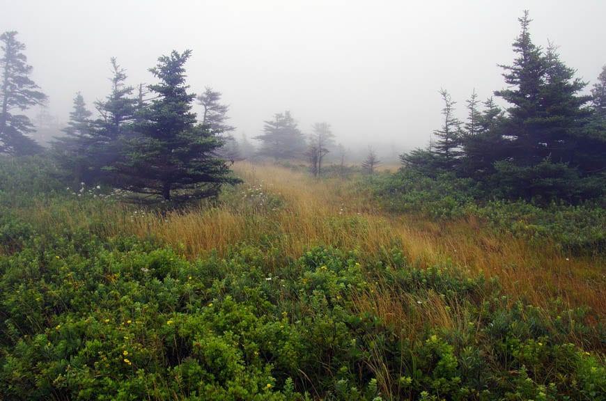Beautiful hiking trails around the Southwest Head Lighthouse