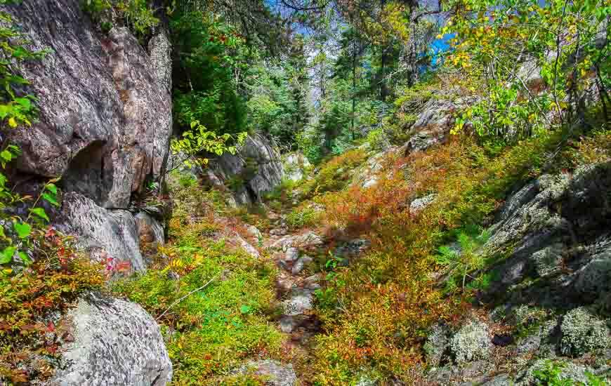 Pukaskwa National Park amazing blueberry bushes