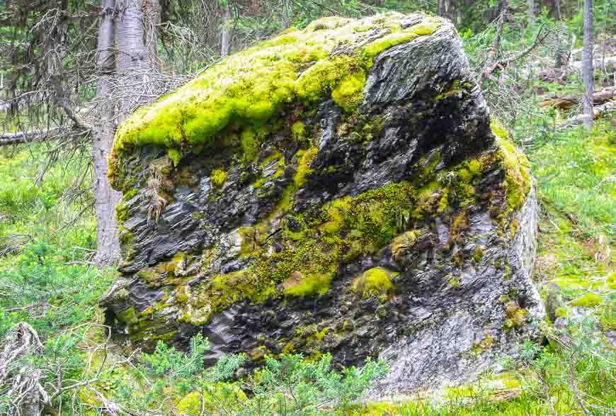 Massive boulder along the trail