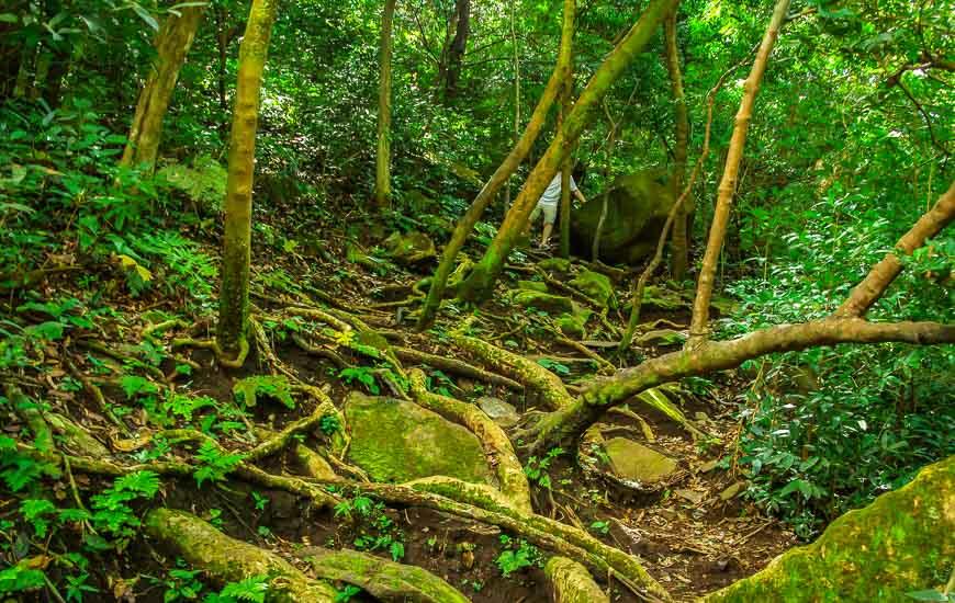 In Rincon de la Vieja sometimes the hiking is very tough