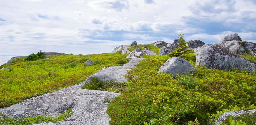 Beautiful rocks and vegetation around Peggy's Cove