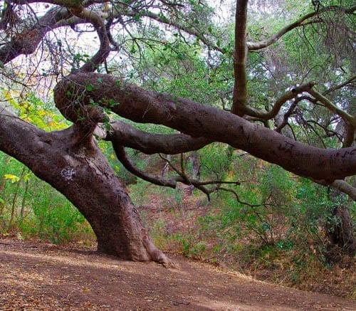 Hike to Escondido Falls