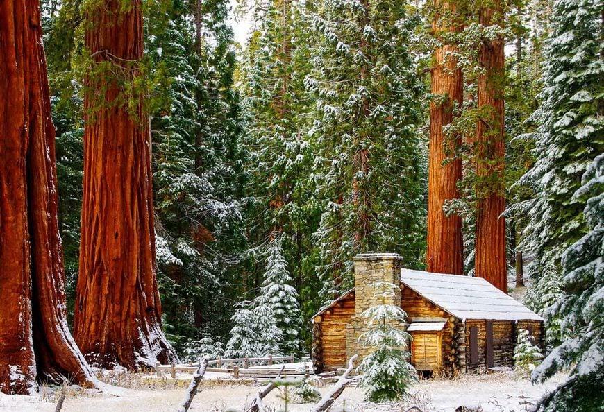 Beautiful Mariposa Grove in Yosemite National Park