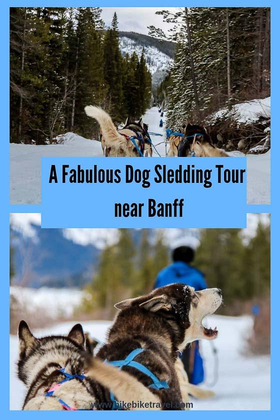 A Dog Sledding Tour near Banff You'll Want to Do