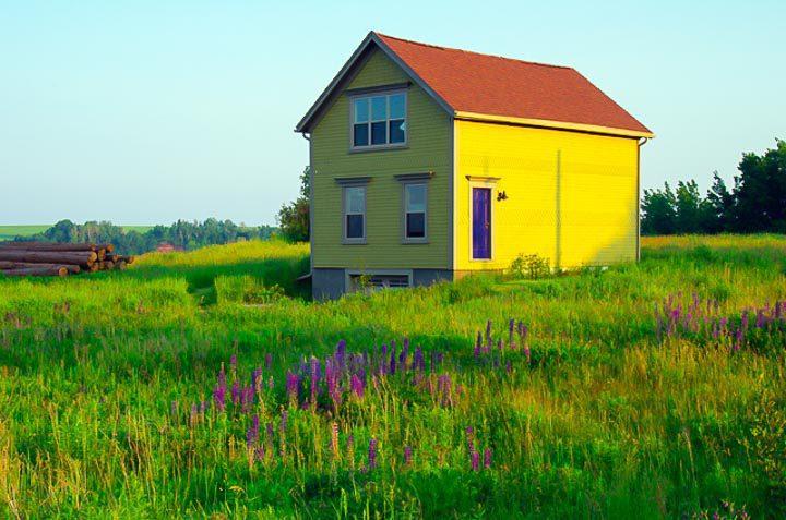 Love the yellow - purple combo near Blomidon Beach