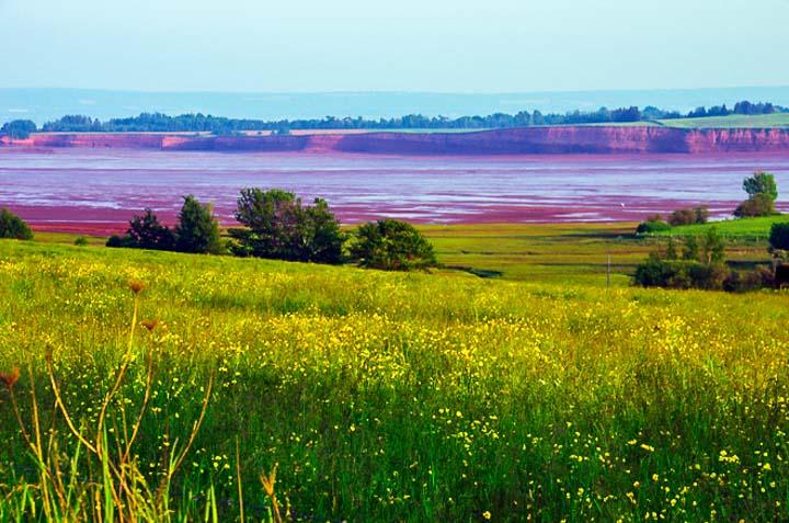 Field of flowers near Blomidon Provincial Park