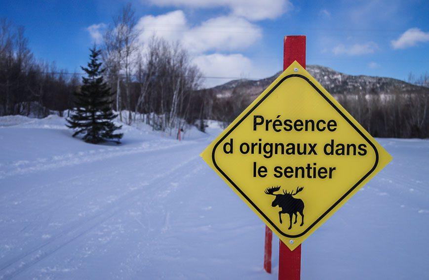 Moose tracks are everywhere