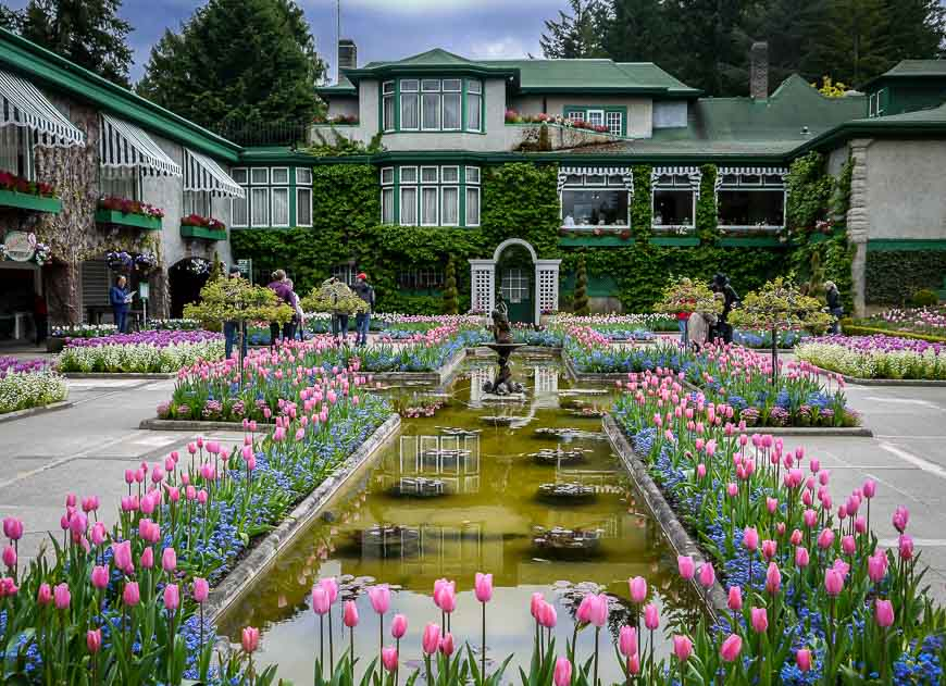 Fountains lined with tulips and forget-me-nots at the Butchart Gardens