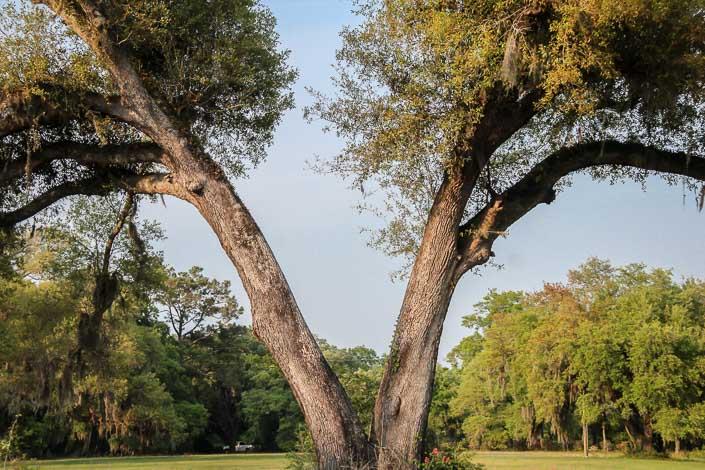 Amazing trees on the road to Botany Island