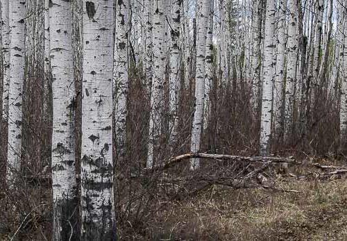 Boreal Trail in Saskatchewan