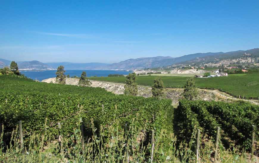 View of Lake Okanagan across the vineyards