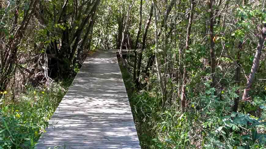 Boardwalk at the bird sanctuary