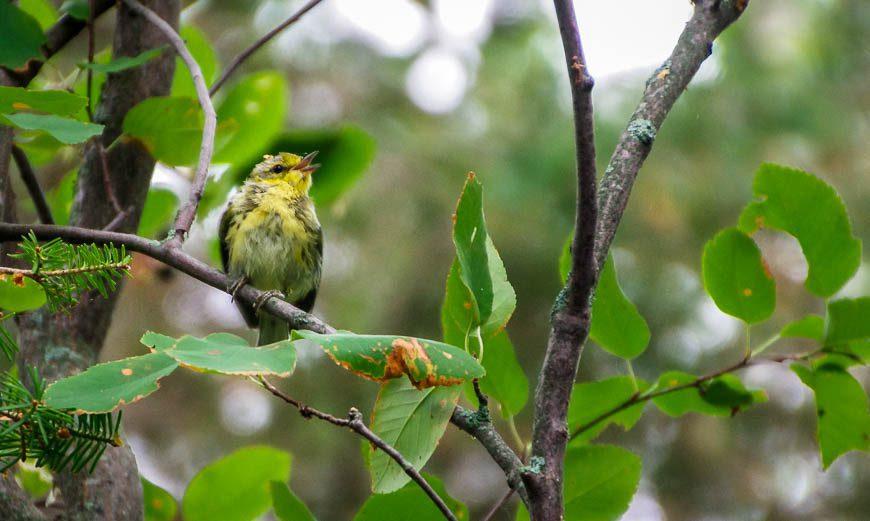 Excellent birding on Hecla Island