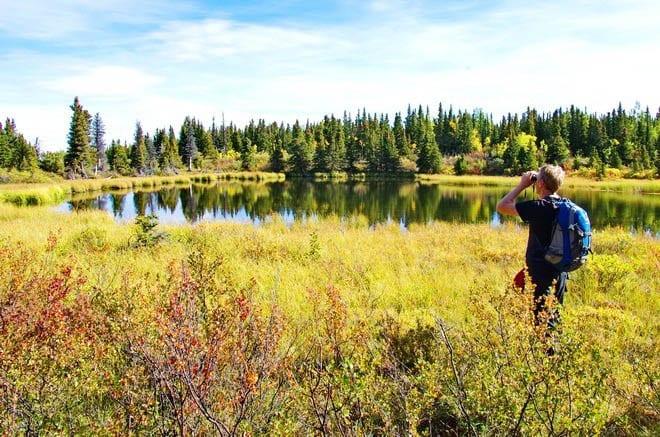 """John looking for birds along the Auriol Trail"""