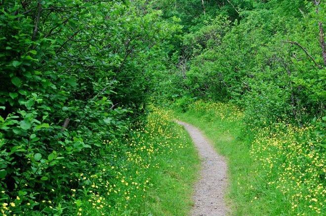 """Gros Morne Mountain trail"""