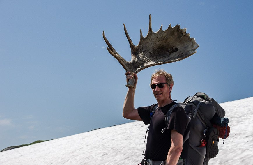One of the moose antlers we found