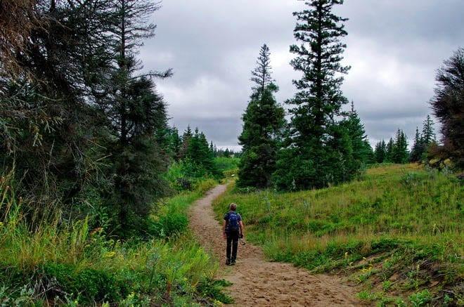 Spirit Sands Trail in Spruce Woods Provincial Park