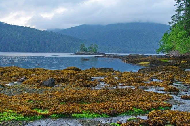 """Our campsite near Rose Harbour, Haida Gwaii"""