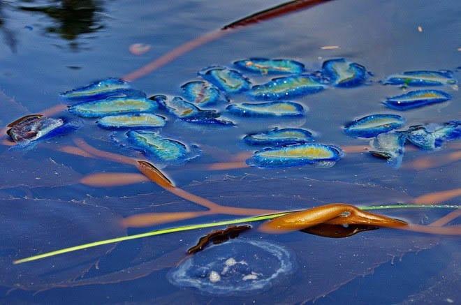 """""""Loads of """"By the Wind Sailors - Haida Gwaii"""""""