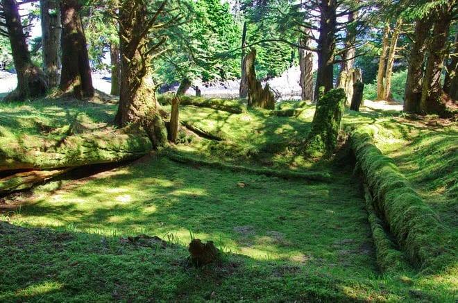 Ruins of a Haida Longhouse