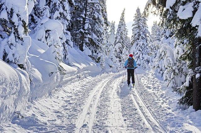 """Cross-country skiing at Peter Lougheed Park"""