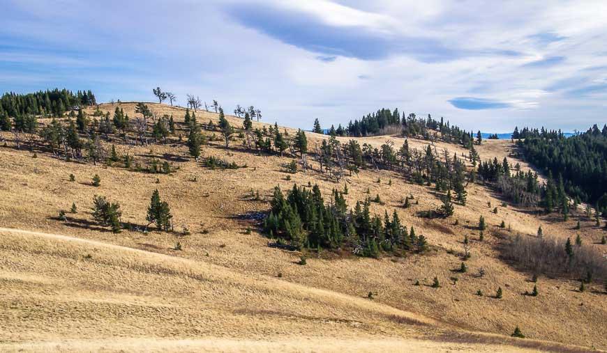 The montane landscape