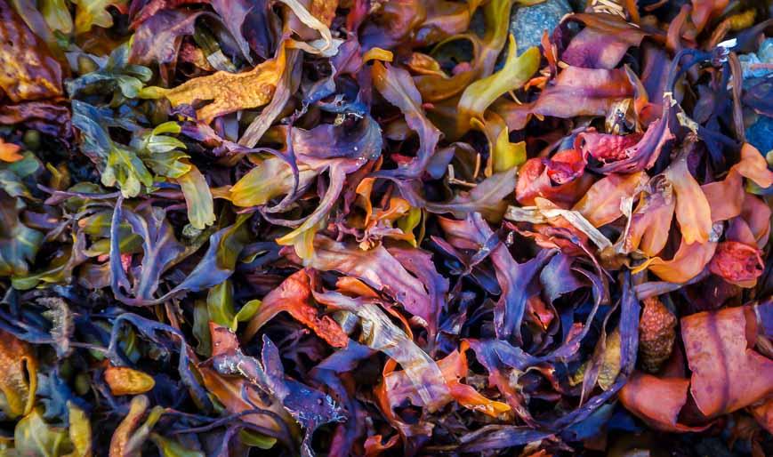 Rainbow coloured seaweed in Gwaii Haanas National Park