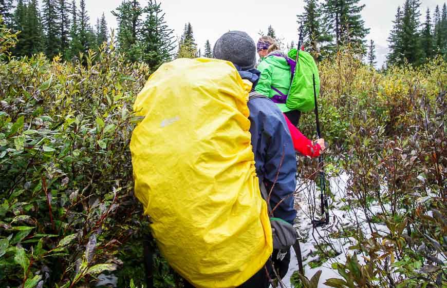 The Marvel Lake Wonder pass hike - in dense vegetation