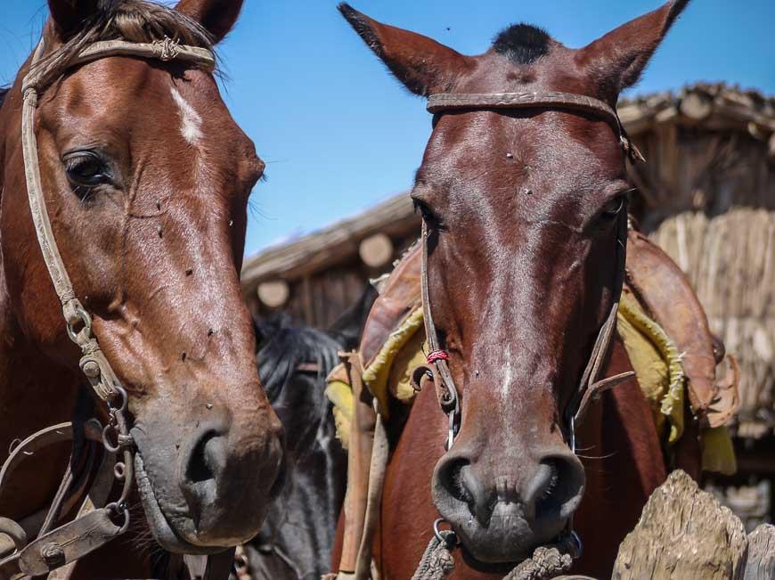 Horseback riding in the hills surrounding Mendoza