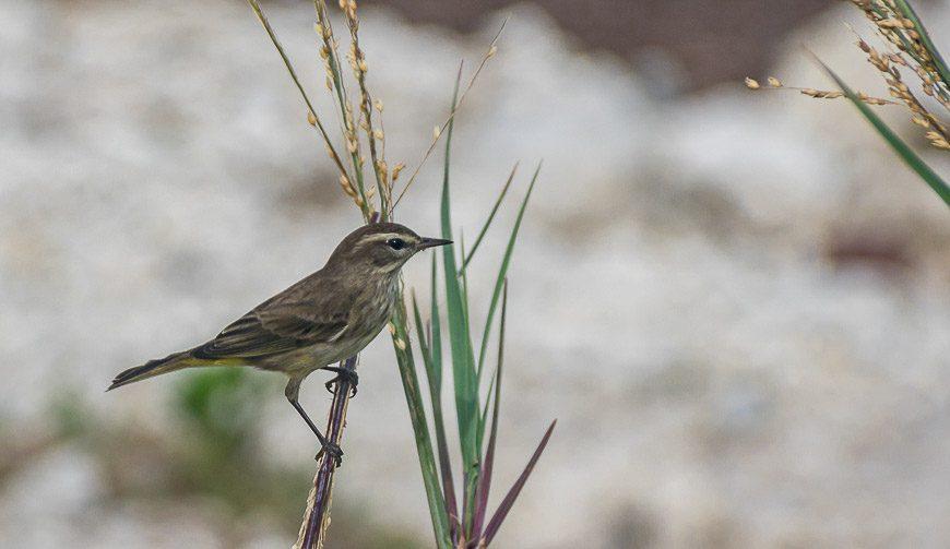 Bahia Honda State Park is a superb park for birding