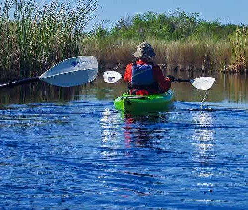 Everglades kayaking on the Turner River