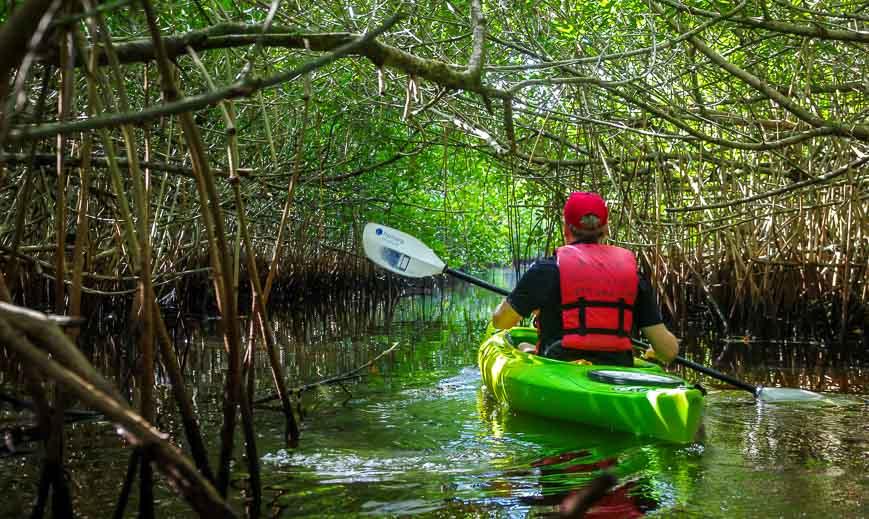 John paddling through another set of mangrove tunnels