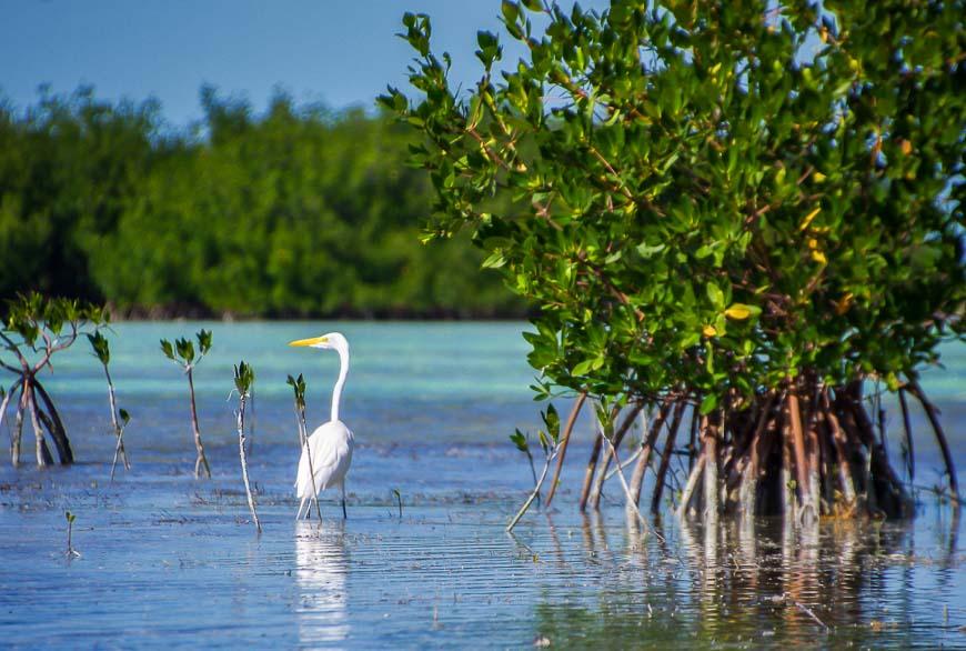Florida Keys kayaking gets you close to lots of seabirds