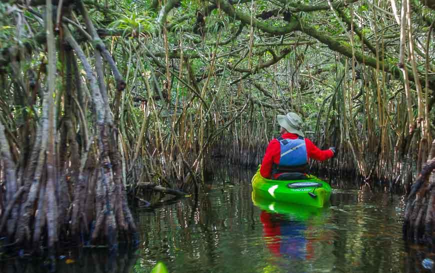 Kayaking through thick groves of mangroves on the Turner River