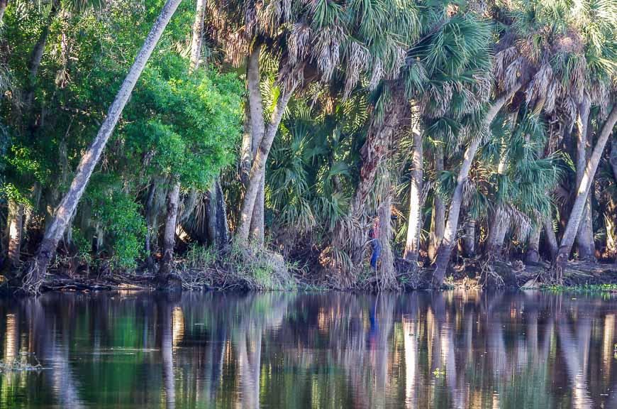 Reflections in the Myakka River in Myakka State Park